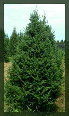 L & M Tree and Wreath - Medford, WI - Quality Christmas Trees, Hand Crafted Wreaths and Garland